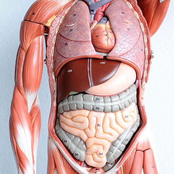 600×600-anatomy